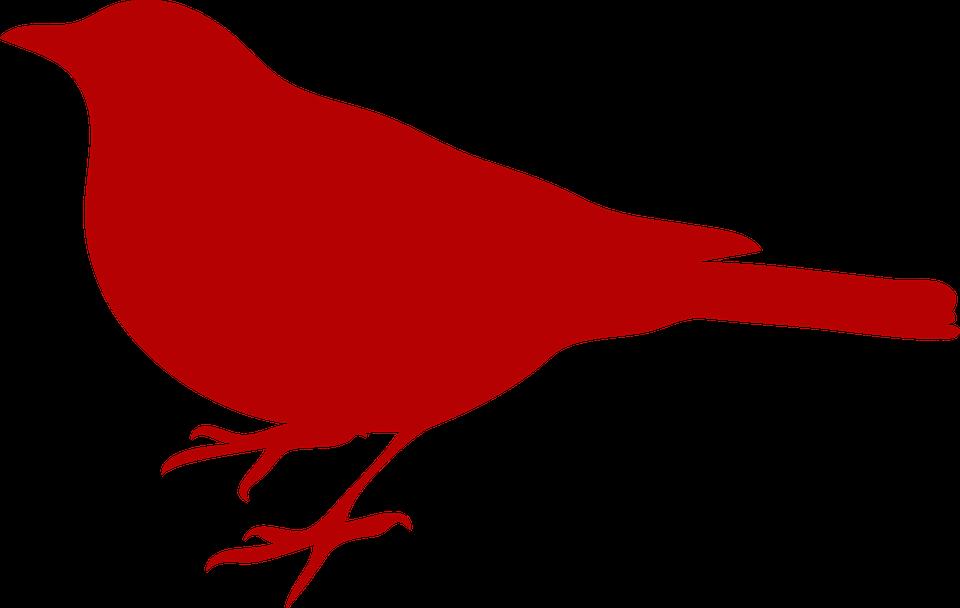赤いカラス